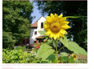 1. August 2014, JOY`s GEBURTSTAG, es ist schon der 8. und ein wunderschöner Sommertag.