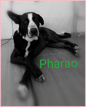 Pharao50