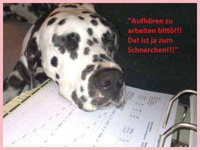 Sencho41